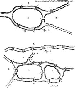 6 Figure1 1 256x300 - 6-Figure1-1