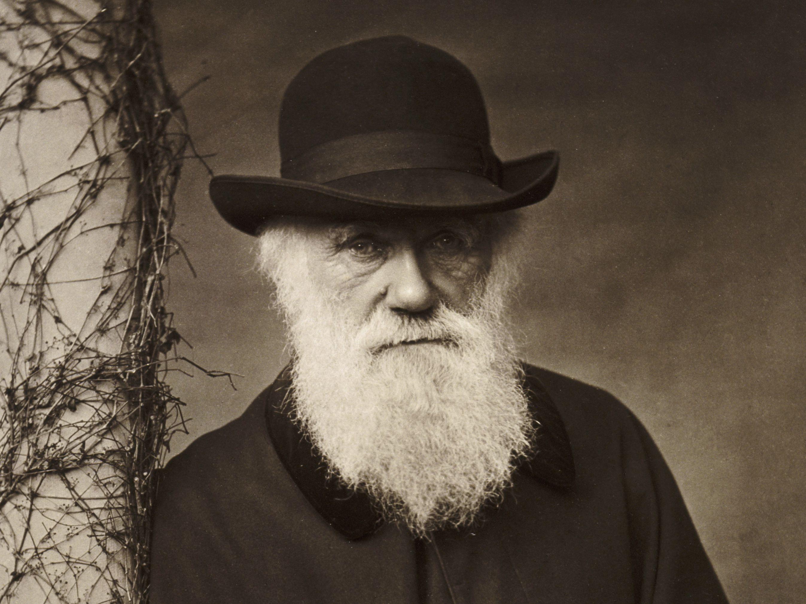 f229fa82d5d23cf6436a34a33b9cd0c4 - Mutation Versus Natural Selection: Masatoshi Nei Challenges Charles Darwin's Evolution Theory