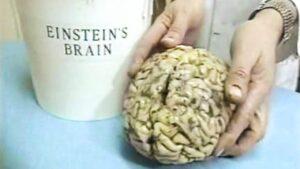 3fb2db6cccf4a23383383394b28b2b31 1 300x169 - Einstein's Brain